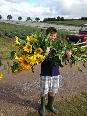British Grown Sunflowers Greenacre Flowers Exeter 300