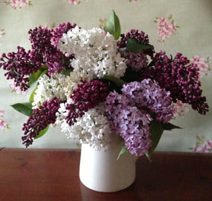 Lilac corporate flowers by Greenacre Flowers Exeter 300